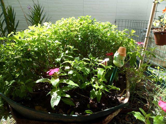 reciclagem - carrinho de pedreiro - meu jardim
