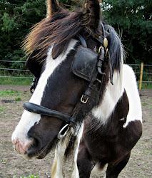Pip the Pony