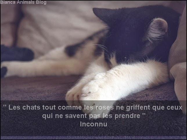bianca animals blog autre citations chiens et chats. Black Bedroom Furniture Sets. Home Design Ideas