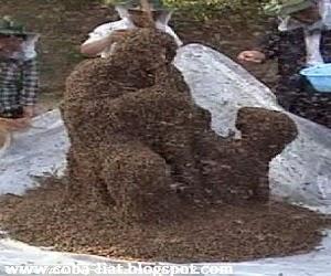 pria-ini-diselimuti-ribuan-lebah
