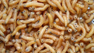 http://www.bbc.com/future/story/20140603-are-maggots-the-future-of-food