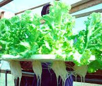 Ebook Panduan menanam sayuran Hidroponik 2