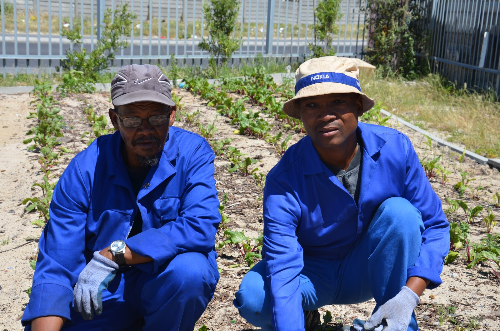 They Are Gardeners At Ikamva Labantu, A Partner Organization, Part Of A  Team Of Five Very Dedicated People Who Tend Vegetables In Townships Outside  Of Cape ...