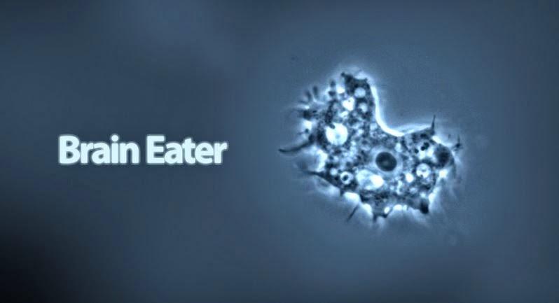 Brain Eating Amoeba Turns Your Body Against You Hi Tech Talk