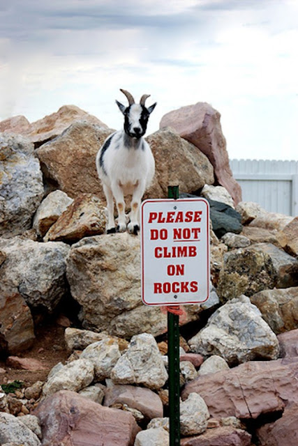 funny sign - do not climb on rocks