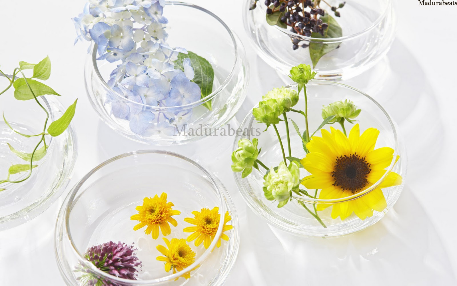 Flower images, Wide screen wallpapers,Gaillardia_wildflower_decorating_with_flowers