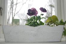 köksfönster