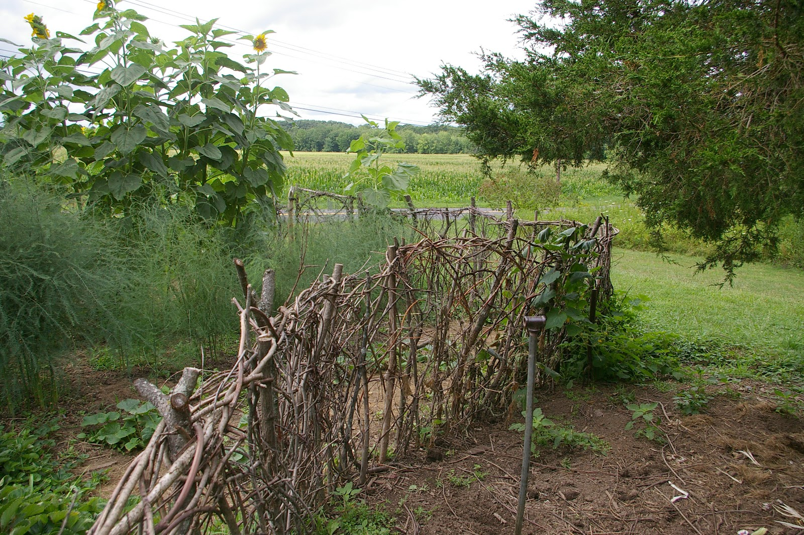 Then another gate this time made with old junk wood from in the barn