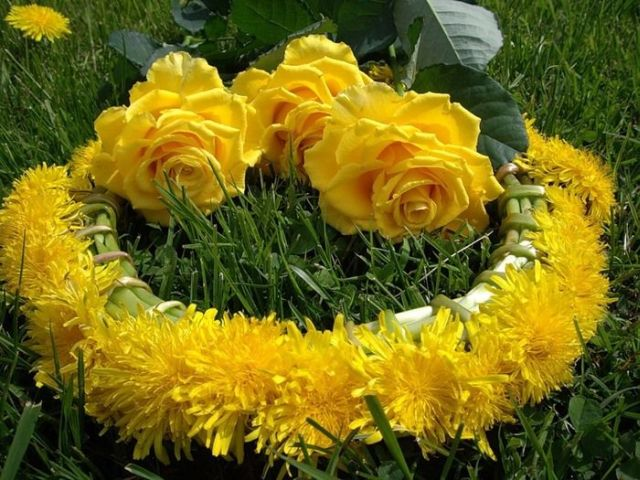 Beautiful Wallpaper Best Yellow Flowers For Your Garden