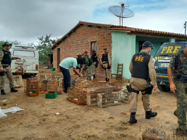 Operação resgatou 2.380 animais dirante a operação (Foto: Divulgação/Polícia Rodoviária Federal)