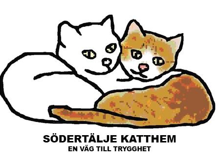 En katt på Södertälje Katthem bloggar