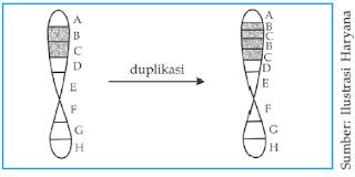 Proses duplikasi