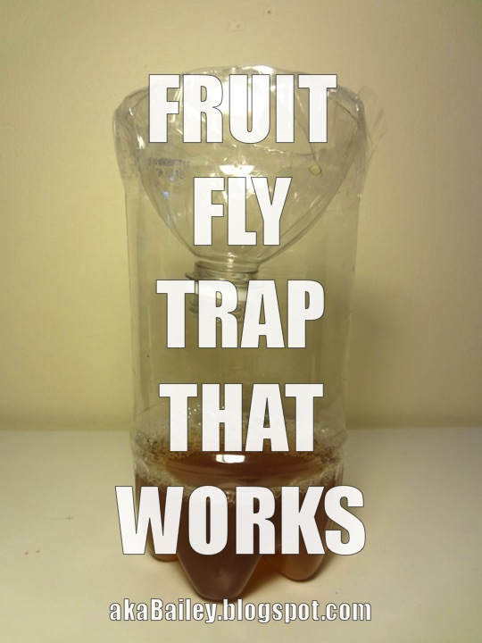 how to make a homemade fruit fly trap