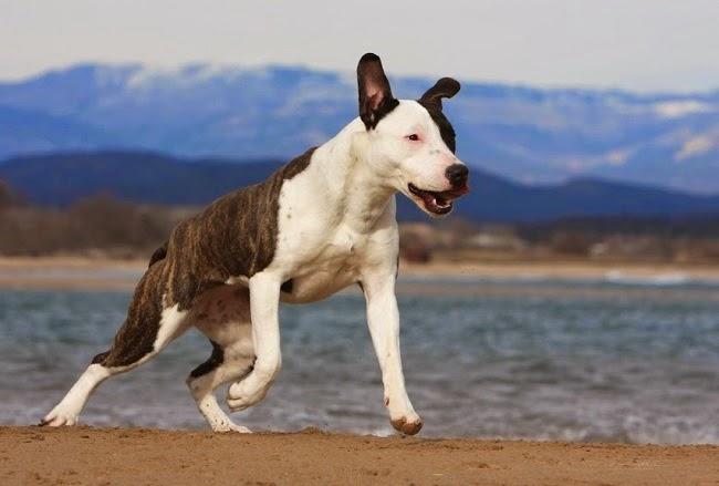 Pies uzależniony od agresji