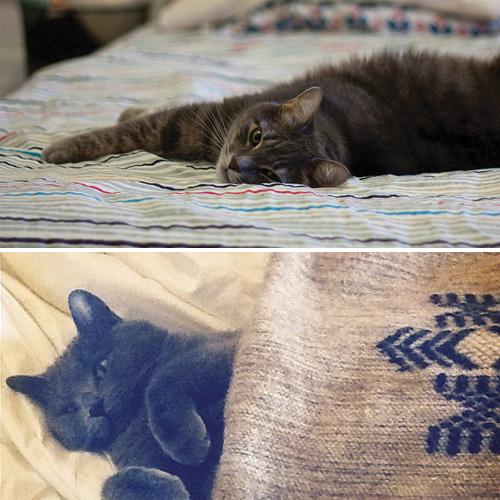 we say meow: Meow 73 / Olivia Mew