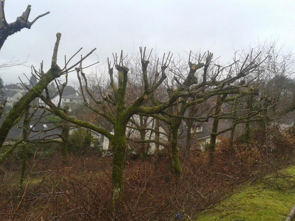 Elagueur jbd l 39 arbre de vie de chasteaux 19600 se for Devis elagage