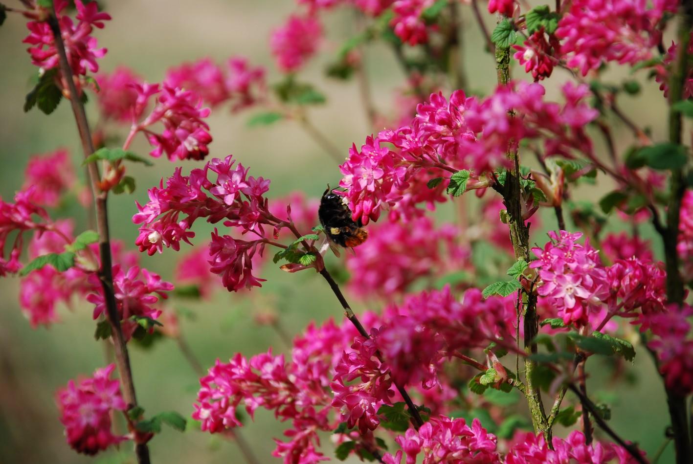 biodiversit dans notre jardin les fleurs de mars. Black Bedroom Furniture Sets. Home Design Ideas