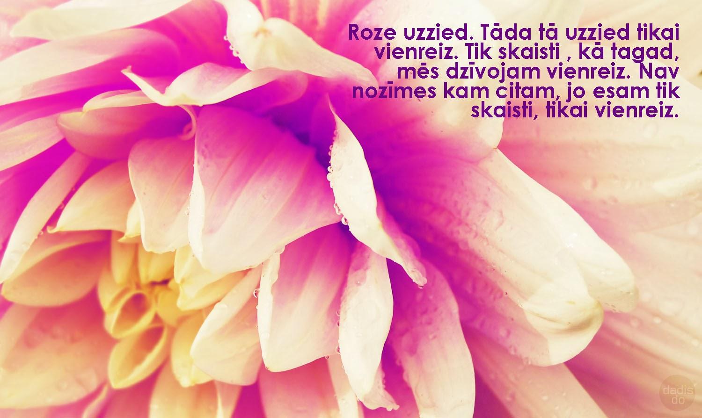 Dālija kādam ir roze. Pat labāka.