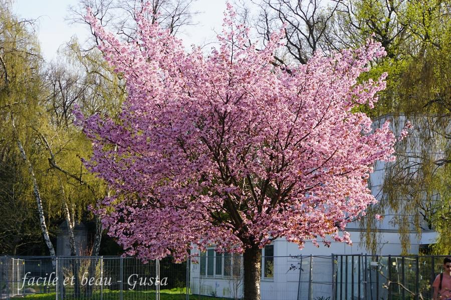 facile et beau gusta rosa bl ten im stadtpark. Black Bedroom Furniture Sets. Home Design Ideas