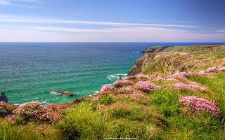 flores silvestres y mar