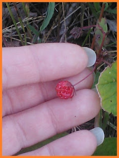 A miniscule but deep red strawberry, less than half the size of my fingertip.