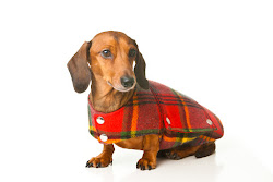 Bespoke Coats for Dogs