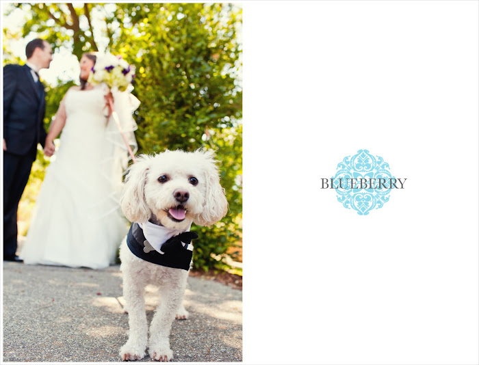 beautiful Lafayette park hotel wedding photography bride groom dog puppy
