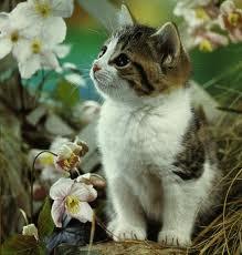 kucing+ku.jpg