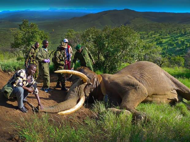 http://4.bp.blogspot.com/-ES7OJbdHpOU/Uoya4tg3ZuI/AAAAAAAAAYg/oURQr7dITBY/s1600/1_kenya_elephant_mountain_bull_FB_620x465.jpg