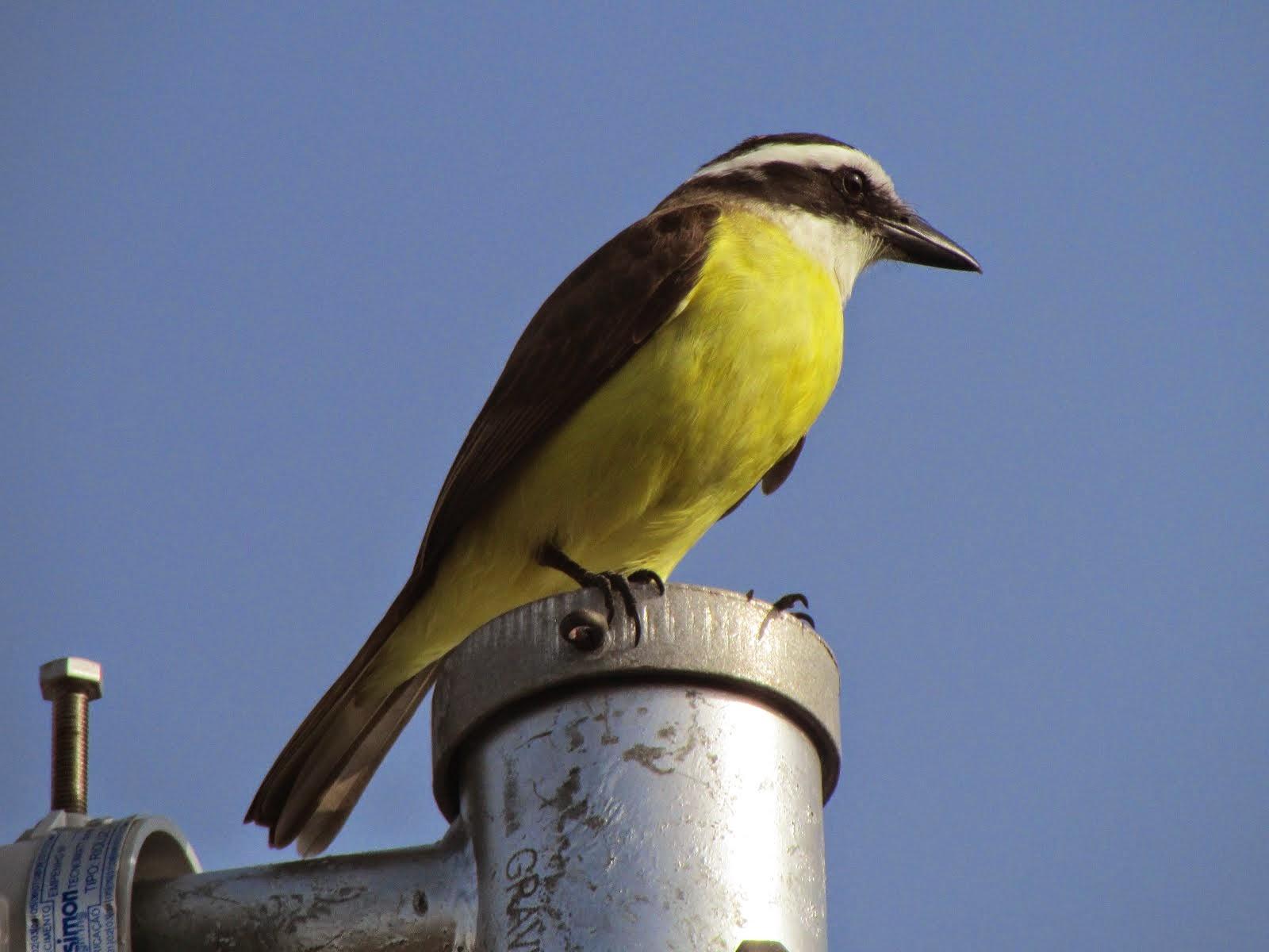O mais triste de um passarinho engaiolado é que ele se sente bem.