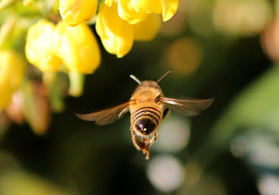 How doth the little busy bee poem by Isaac Watts
