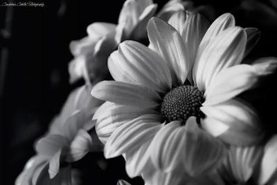 black white flower arrangements