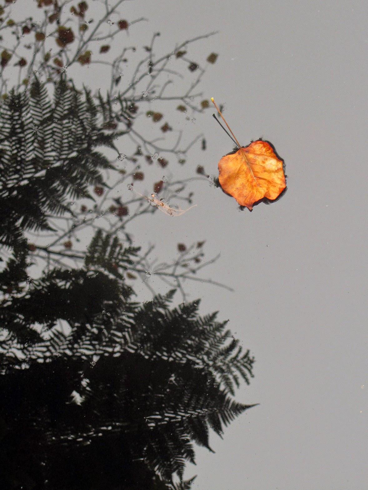 floating orange leaf