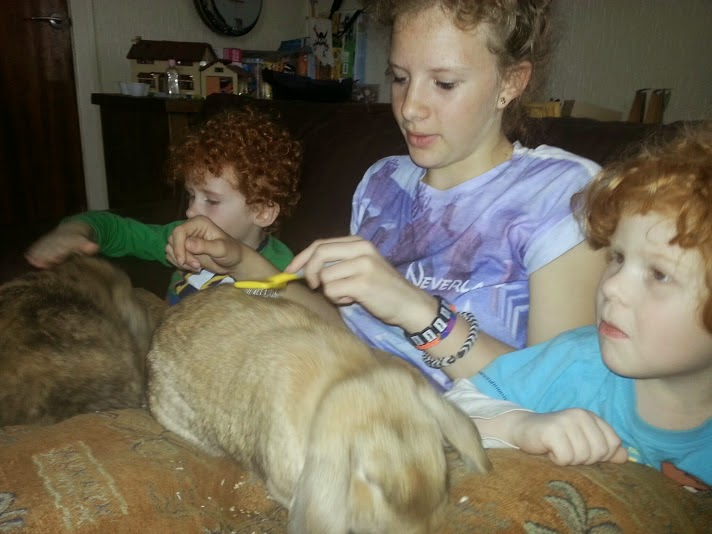 Barny Bear's Little Adventure - children brushing rabbit
