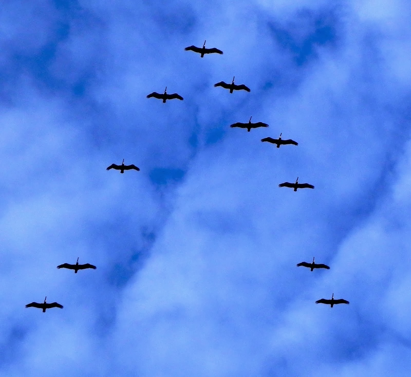 Sea Birds in Formation