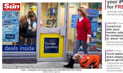 Cadela 'careca' veste macacão para poder passear nas ruas da Inglaterra
