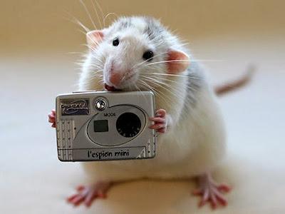 Una proteína normaliza el nivel de azúcar en ratones con diabetes