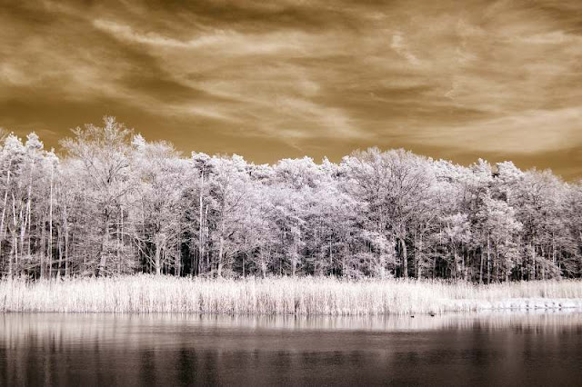 landscape infrared photography