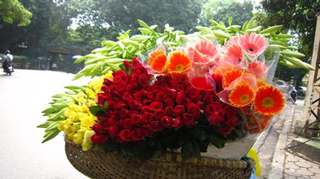 Hình ảnh hoa đẹp - Hoa loa kèn 11