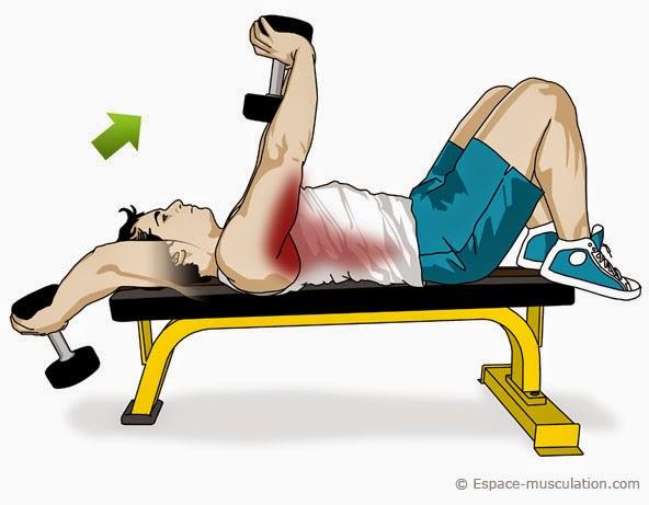 Pull over l 39 exercie parfait pour muscler les triceps et les dorsaux methode de musculation - Exercice de musculation avec banc ...