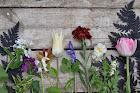 Floral Acre