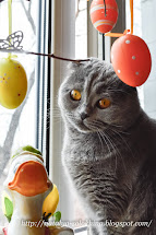 Котик месяца АПРЕЛЬ