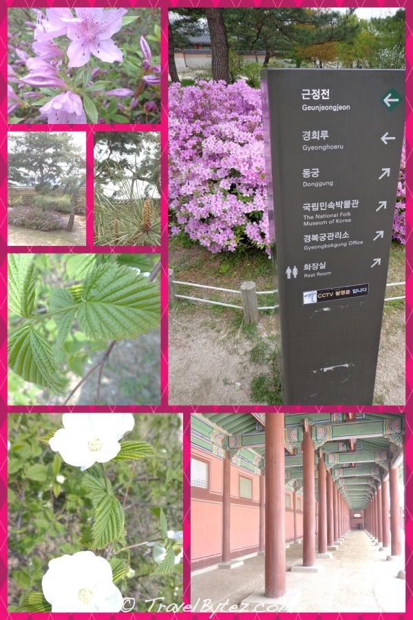 Gyeongbokgung (경복궁)
