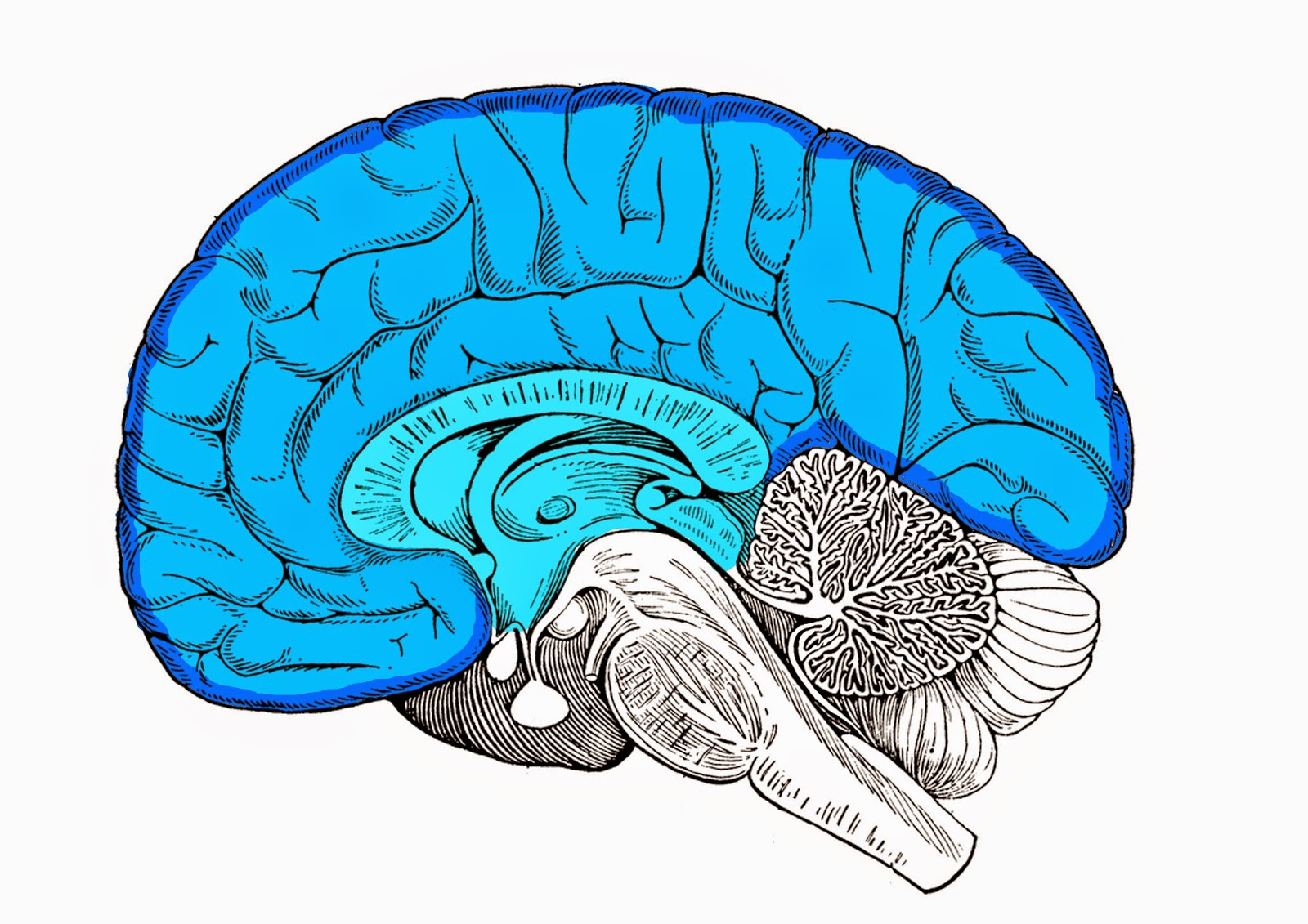 Encefaloguía para neuromarketers - Brain and Marketing
