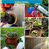 It Turns Out, This Is Going To Be HUGE For My Child #DIY #Gardening