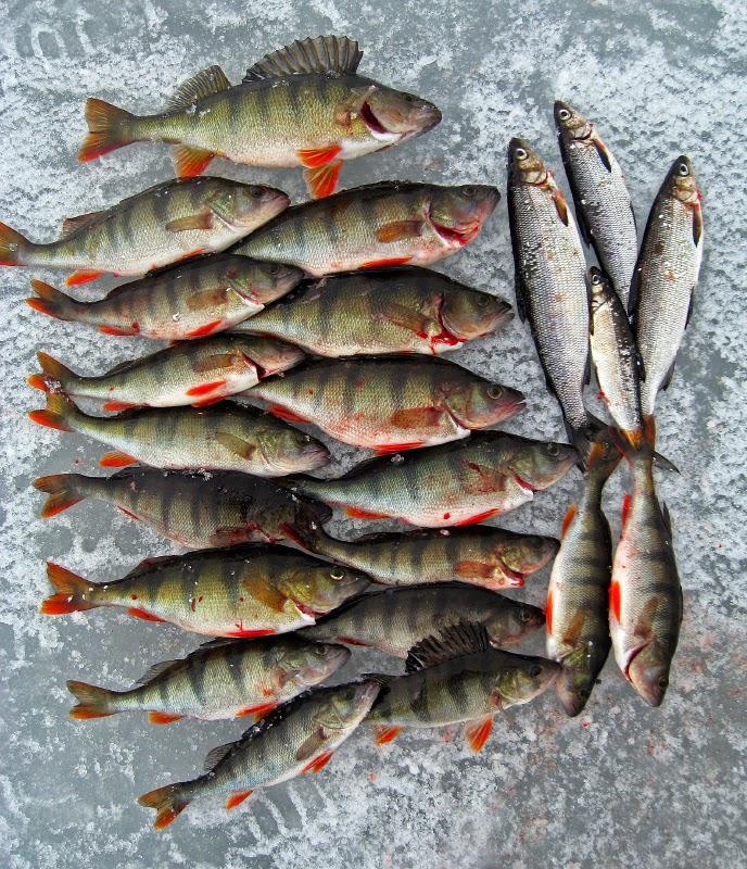 Täkykalastus