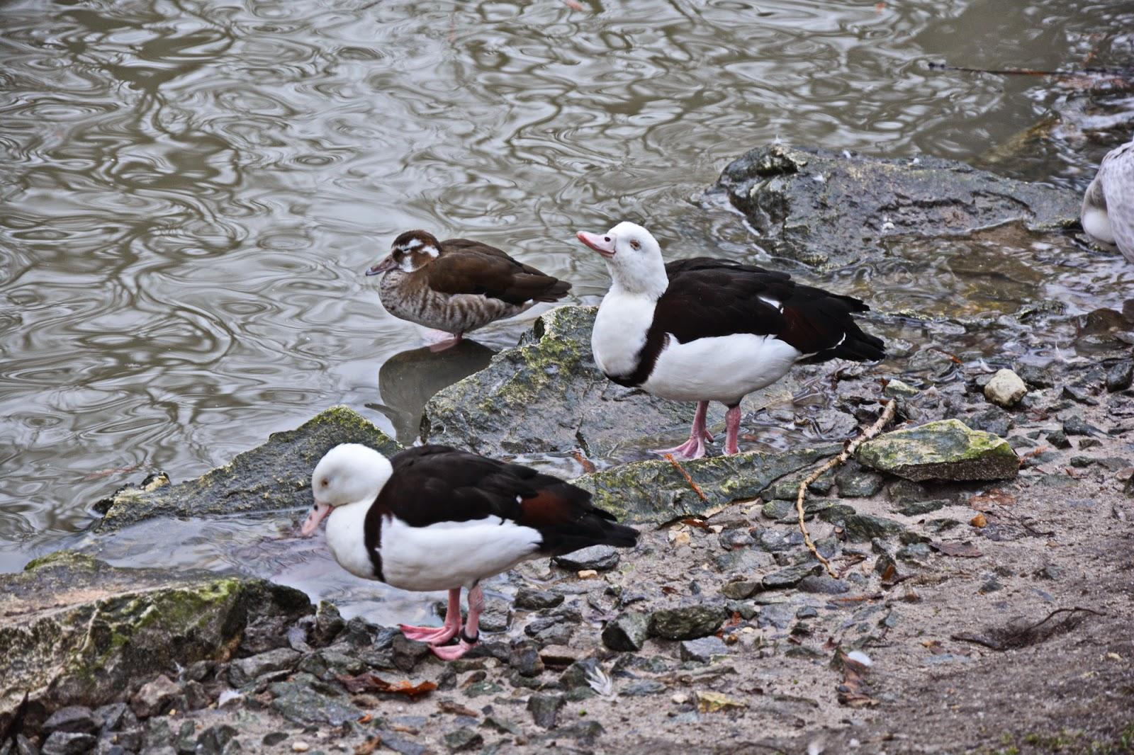 oiseaux du zoopârc de beauval