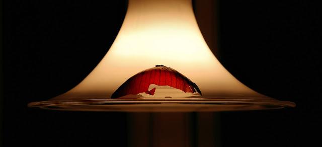 Photo:in the spotlight © Mariann Lennert