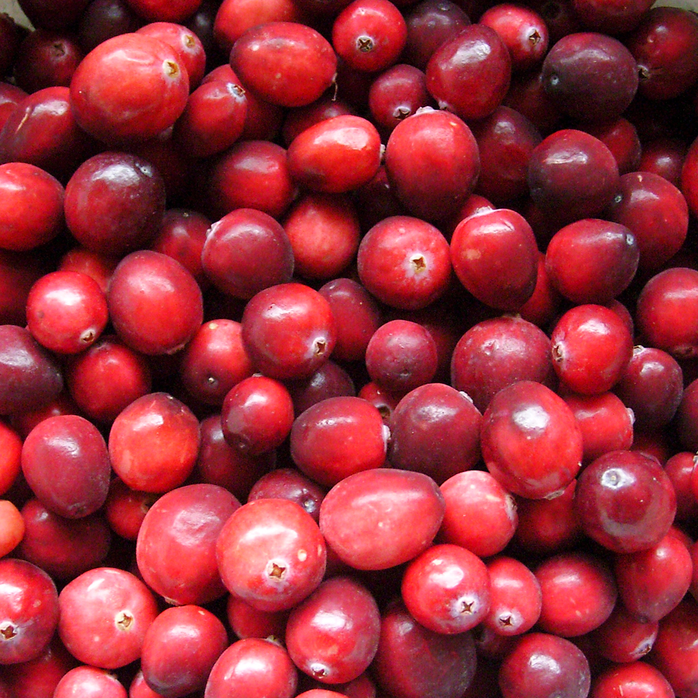 Dying for chocolate chocolate covered cranberries fresh for What to make with fresh cranberries
