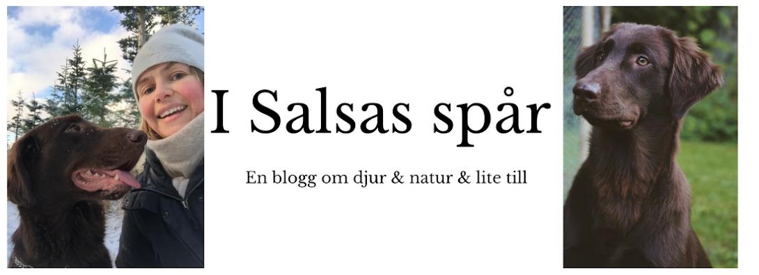 I Salsas spår